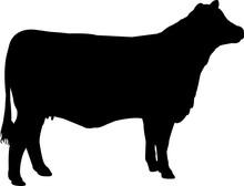 Brangus Cow Vector Silhouette