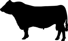 Red Angus Cow Vector Silhouette