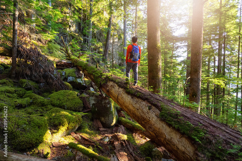 Cuadros en Lienzo Adventurous Man hiking on a fallen tree in a beautiful green forest during a sunny summer evening