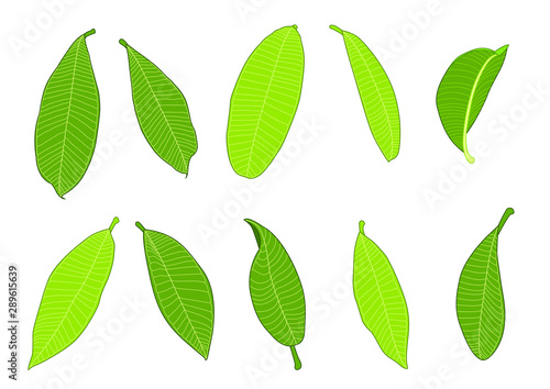 Fényképezés  Green Leaves fresh abstract isolated on white background illustration vector