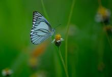 Roadside Butterflies And Flowers