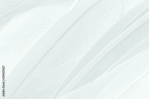Cygne Beautiful white feather pattern texture background