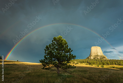 Solo tree and Devils Tower National Monument of Wyoming, USA under the rainbow a Wallpaper Mural