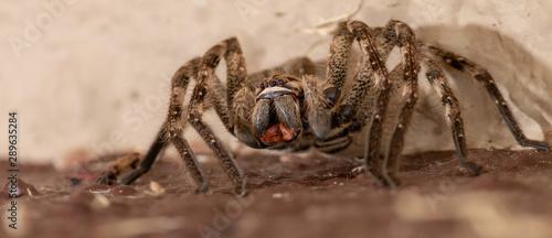 Photo Rain Spider