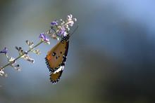 Monarch Butterfly On Wildflower In Park Outdoor