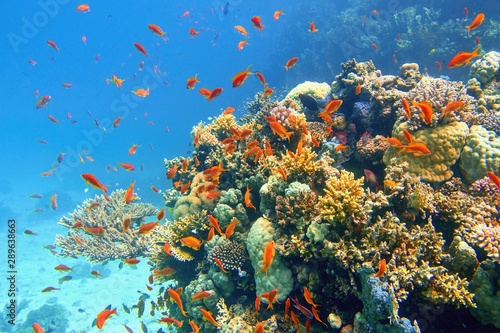 Fond de hotte en verre imprimé Recifs coralliens Beautiful tropical coral reef with shoal or red coral fish Anthias