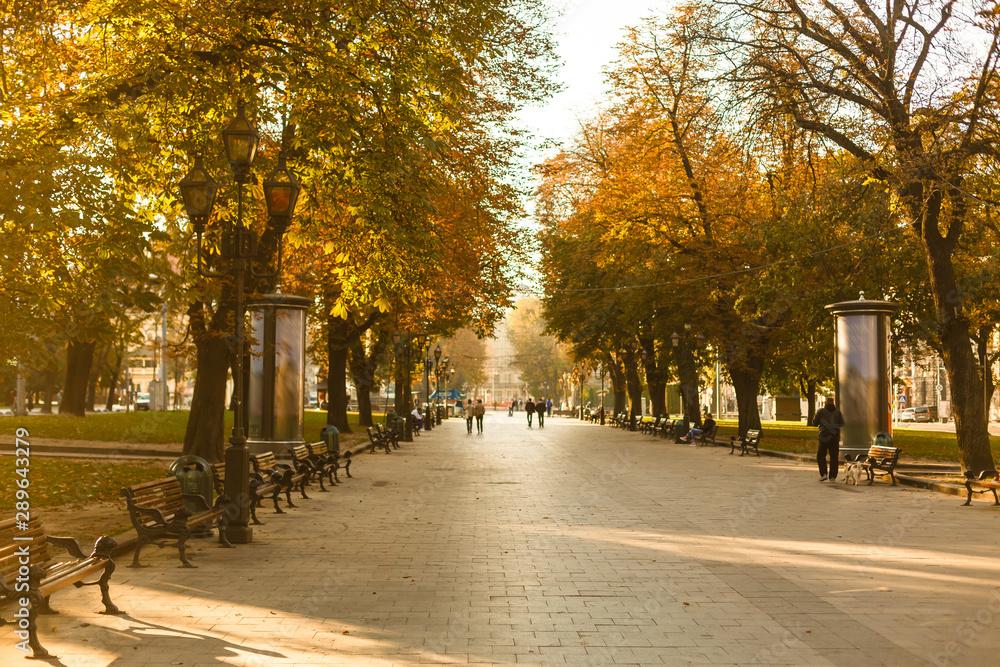 Fototapety, obrazy: autumn park in the city, morning street
