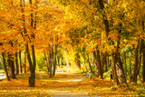 Fototapeta Perspektywa 3d - Leaf fall in the park in autumn. Landscape with maples and other trees