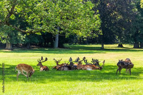 Spoed Fotobehang Ree Roe deer standing in a forest