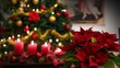 Christmas Flowers,Poinsettia plant,candles,illuminated tree background