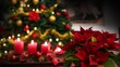 Christmas Flowers,Poinsettia plant,candles,text Merry Christmas illuminated tree background