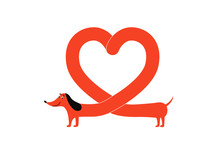 Red Dachshund Dog With Heart Shape Body, Cute Pet Animal Forming A Love Symbol