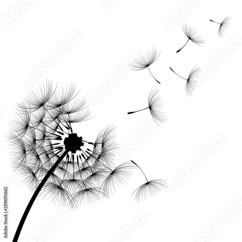 Fotografie, Obraz Vector Dandelion silhouette blowing dandelion flying aircraft has been decorated with black paint outdoors on a white background