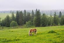 Beautiful Horse Graze On Grass...