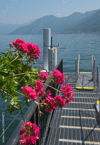 Photo geraniums flowers at the pier, Argegno, Lake of Como, Italy
