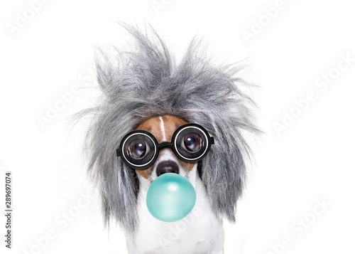 Fotobehang Crazy dog intelligent smart dog with an idea, chewing bubble gum