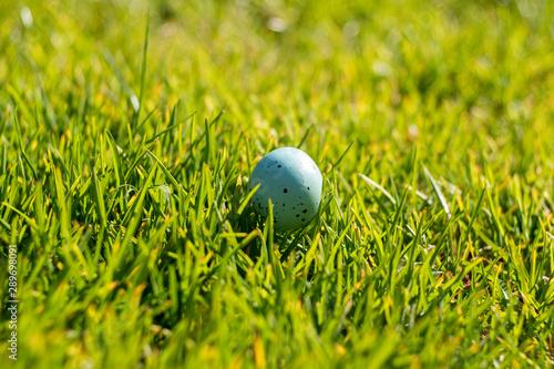 Fototapeta jajko w zielonej trawie obraz