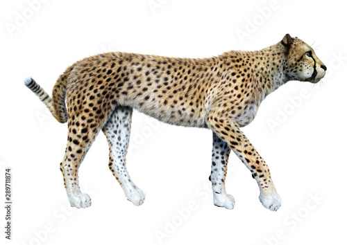 renderowanie-3d-big-cat-cheetah-na-whi