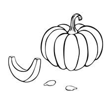 Pumpkin Or Squash Outline Illu...