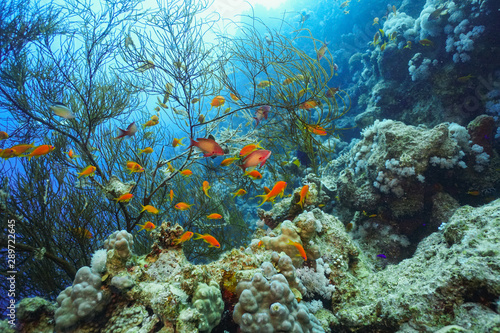 Underwater shot of the vivid coral reef in tropical sea. Fish swimming over the reef