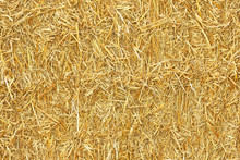 Bale Of Golden Straw Texture. Animal Food Background