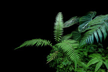 Fern Fronds, Philodendron Leav...