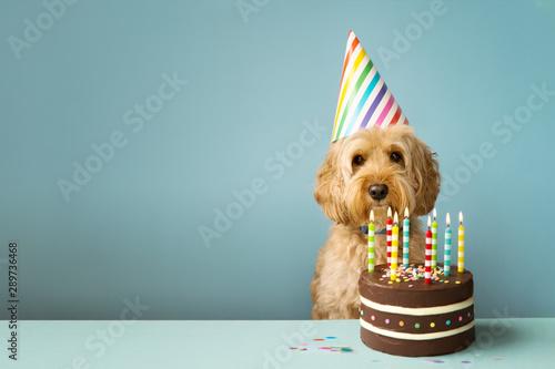 Photo sur Aluminium Chien Dog with birthday cake