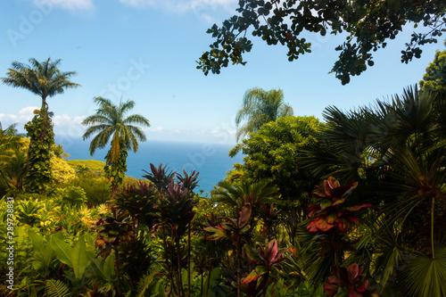 Tropical Garden Maui Hawaii