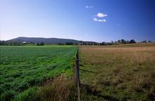 The Other Man's Grass Is Always Greener. Australia.