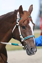Horse Racing At The Track Deta...