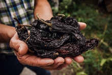 Chile Ancho, Mexican Dried Chi...