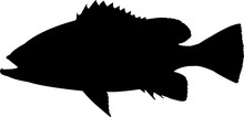 Speckled Hind Fish Silhouette ...