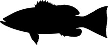 Gag Grouper Fish Silhouette Ve...