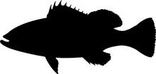 Nassau Grouper Fish Silhouette Vector