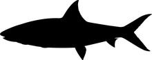Bonefish Fish Silhouette Vector