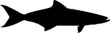Cobia Fish Silhouette Vector