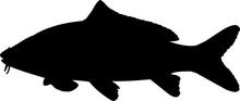 Common Carp Fish Silhouette Vector