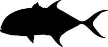 Crevalle Jack Fish Silhouette Vector