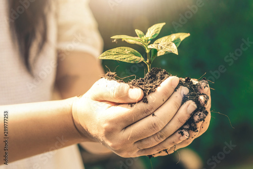 Foto  Young plant tree sprout in woman hand