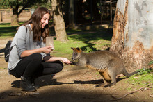 Tourist Wallaby Experience