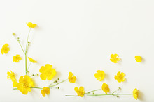 Yellow Buttercups On White Bac...