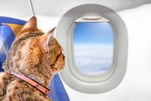Tan Cat Pet Animal On Seat Of ...