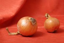 Still Life - Onion