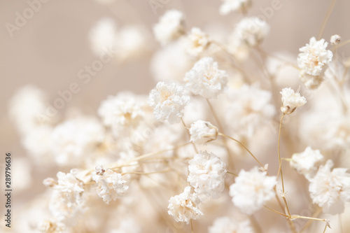Autocollant pour porte Macro photographie Gypsophila dry little white flowers light macro