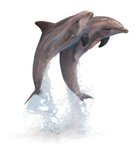 Two Jumping Dolphins Isolated