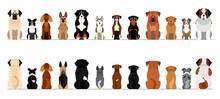 Large Dogs Border Border Set, Full Length, Front And Back