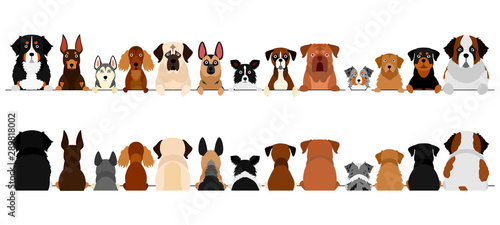 large dogs border set, upper body, front and back Fototapete