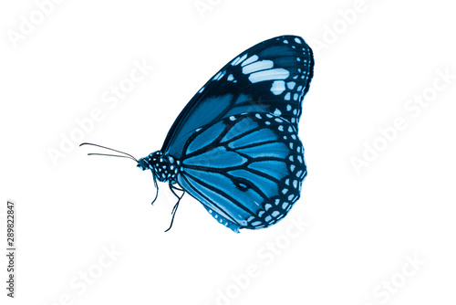 Fotografía  Blue butterfly isoalted on white background