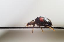 Beetle On Black Background
