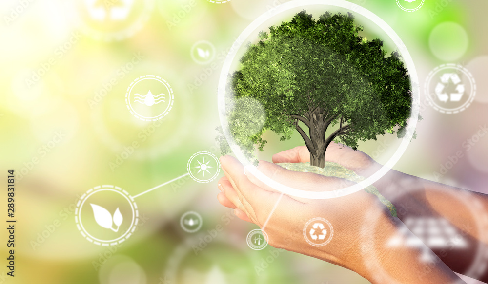 Fototapeta A woman's hands holding a miniature tree. Environmental biodiversity in ecosystem concept. Backdrop as a concept of energy efficiency. The power of green energy. Concept of renewable energies